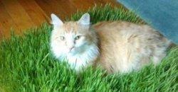 แมว กับของเล่น 5 อย่างสุดครีเอท ที่ทาสแมวต้องรู้