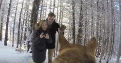 ให้สุนัขถ่ายวิดีโองานแต่งงาน งานนี้โรแมนติกเหมือนเดิม เพิ่มเติมคือความแปลกใหม่!
