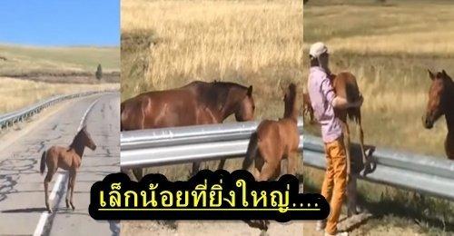 เล็กน้อยที่ยิ่งใหญ่ หนุ่มช่วยลูกม้ากลางถนน ส่งตัวให้แม่ม้าที่อยู่ระหว่างที่กั้นของถนน