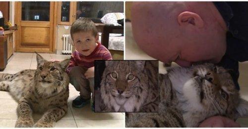 ครอบครัวรัสเซียเลี้ยงลิงซ์ไว้ในอพาร์ทเม้นท์ หลังเกือบจะถูกทำเป็นหมวกขนสัตว์ ก่อนจะได้ชีวิตใหม่(คลิป)