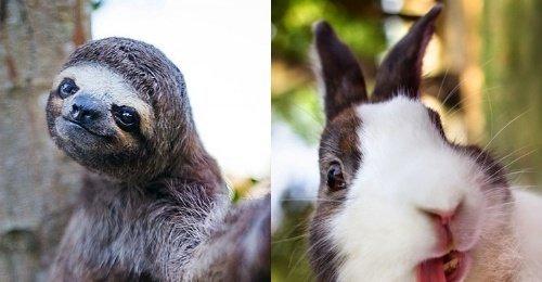 เซลฟี่สุดปัง รวมภาพเซลฟี่ของบรรดาสารพัดสัตว์ ที่บอกเลยว่าฮาสาด
