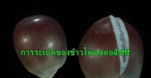 ภาพสโลว์โมชั่น เผยวินาทีการระเบิดของเมล็ดข้าวโพดที่กลายเป็นป๊อปคอร์น แบบที่สายตามนุษย์ไม่เคยเห็น