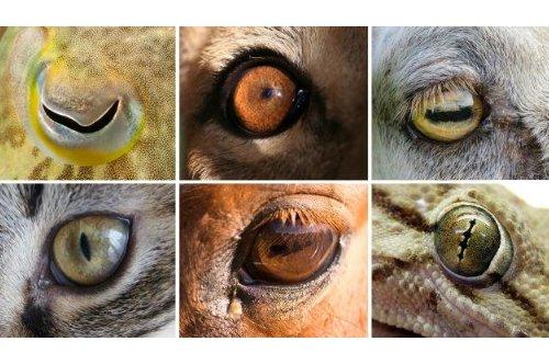ดวงตาสัตว์ ทำไมตาดำสัตว์ถึงมีแบบแนวตั้งกับแนวนอน เรื่องแบบนี้มันลึกซึ้งถึงชีวิต!!