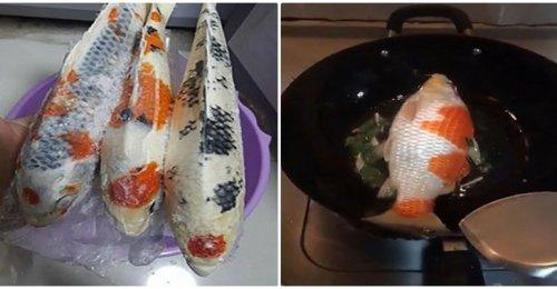 ปลาคาร์พทอดกระทะ!! นาทีสลด มื้อหรูราคา 86,000 แต่ชาวเน็ตกลับอยากรู้รสชาติเป็นยังไง!! (คลิป)
