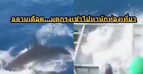 ฉลามสุดโหดมุดเข้ากรงนักท่องเที่ยว เห็นแล้วเสียวแทนเกือบเอาชีวิตไม่รอด