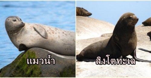 ความแตกต่างระหว่าง แมวน้ำ กับ สิงโตทะเล ที่หลายคนยังแยกไม่ออก ให้สังเกตจากสิ่งนี้คุณจะพอแยกออก