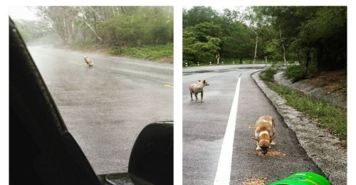 เจ้าหมาหิวโซสุดหน้าสงสาร ยืนตากฝนรออาหารจากคนใจดีอยู่กลางถนน เห็นแล้วเศร้าสุดๆ