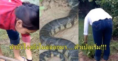 สาวจับงูยักษ์ ไม่น่าเชื่อ! สาวตัวเล็กเข้าป่าพร้อมอุปกรณ์บางอย่างที่ใช้ปราบงูตัวมหึมาได้แบบคาดไม่ถึง
