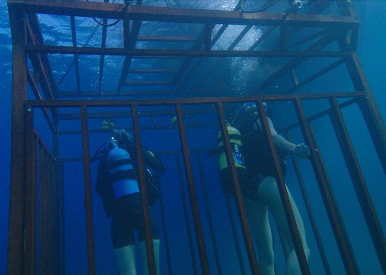 ระทึกกับมฤตยูร้ายแห่งท้องทะเลลึก ฉลามยักษ์ โหดสุดขั้วใน 47 ดิ่งลึกเฉียดนรก