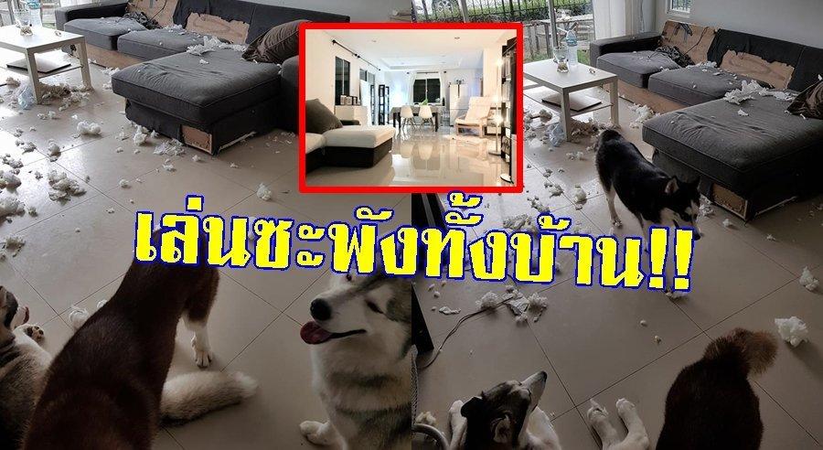 หนุ่มถึงขั้นน้ำตาเล็ด!! ปล่อยหมาไว้ในบ้าน กัดของพังไม่เหลือชิ้นดี ลั่นนี่เลี้ยงหมา หรือเลี้ยงโจร!!