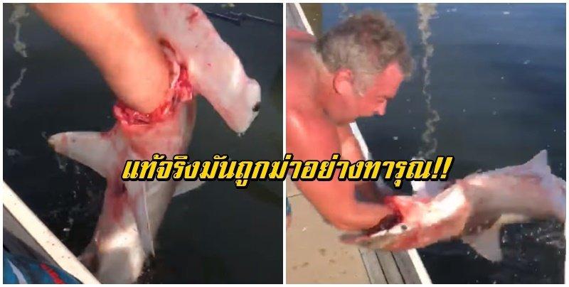 วิจารณ์หนัก คลิประทึกขวัญ ประมงดึงแขนเจอฉลามหัวค้อนเขมือบ แต่แท้จริงมันถูกฆ่าทารุณ! (คลิป)