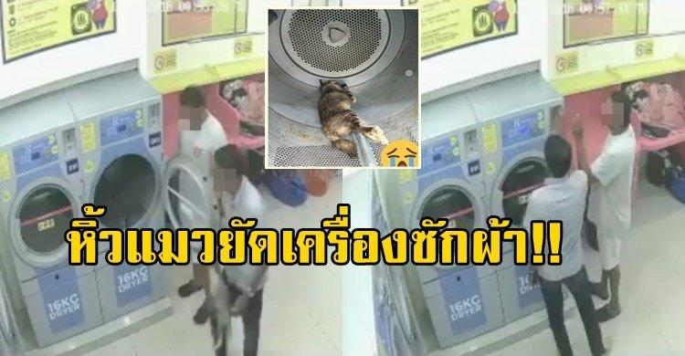 2 ชายโหด จับแมวท้องยัดเครื่องซักผ้า ยืนมองหัวเราะสะใจ ก่อนปล่อยให้ตายคาเครื่อง