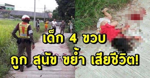 สังเวยชีวิตให้สุนัข! เด็ก 4 ขวบ ถูกสุนัข 3 ตัว ขย้ำจนขาดใจ! หลังออกมาปั่นจักรยานเล่นในหมู่บ้าน